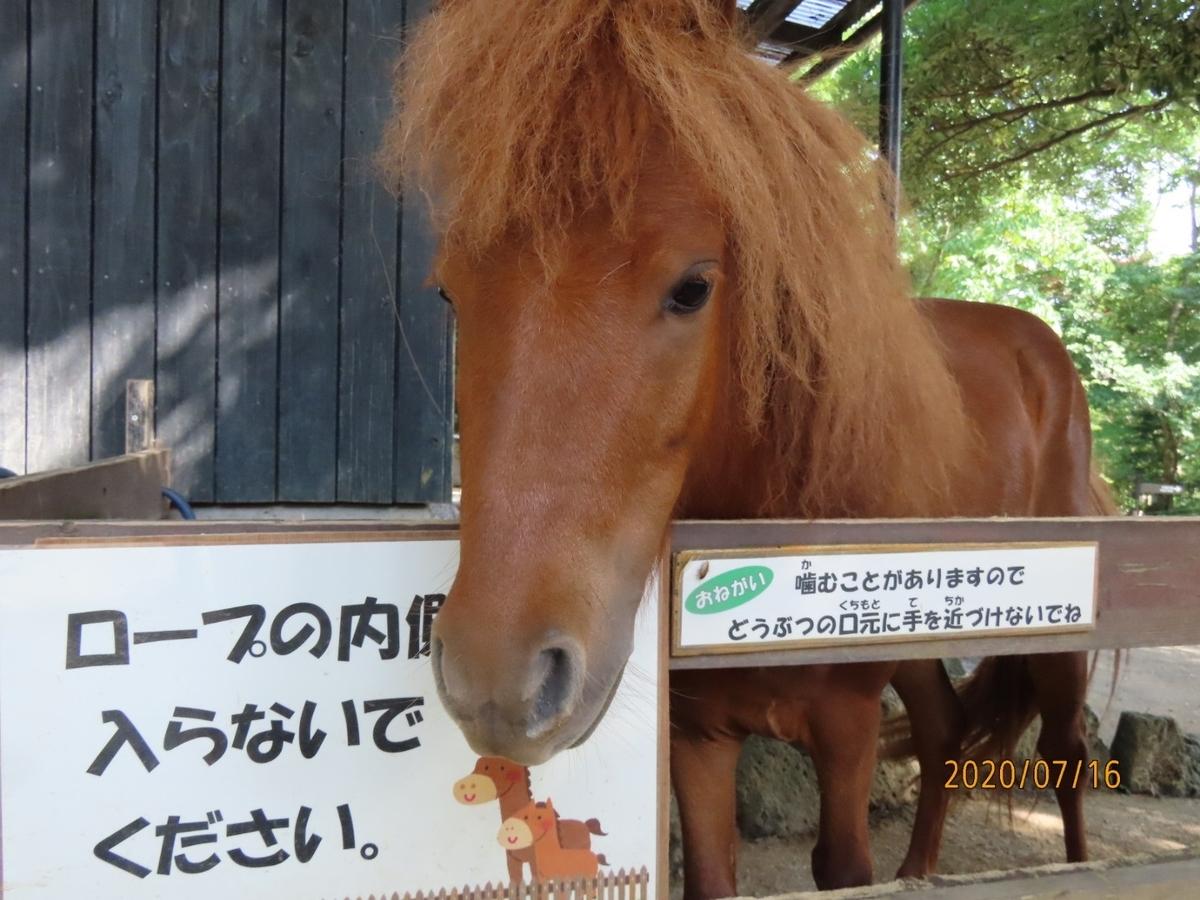 f:id:oisomachi-konkatsu-kekkon:20200717233802j:plain