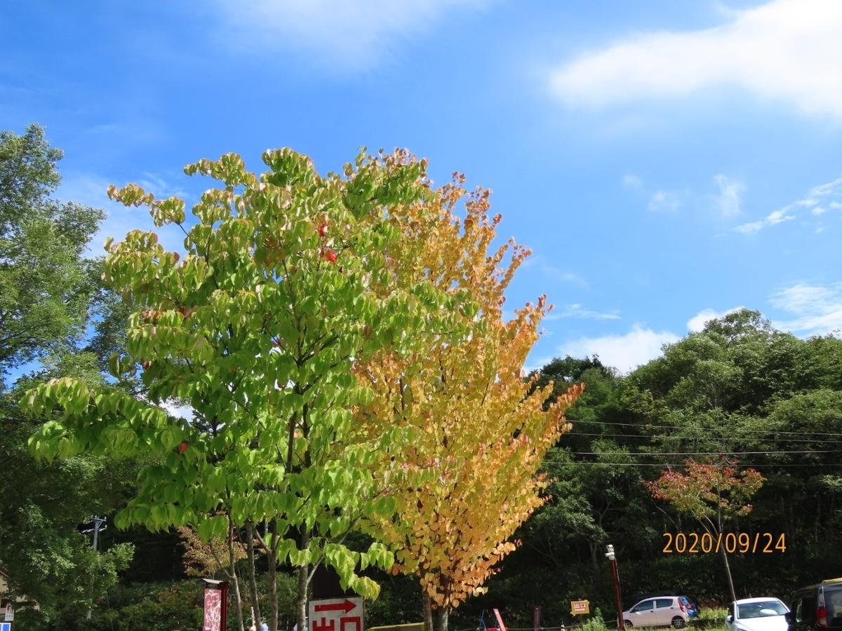 f:id:oisomachi-konkatsu-kekkon:20200929203434j:plain