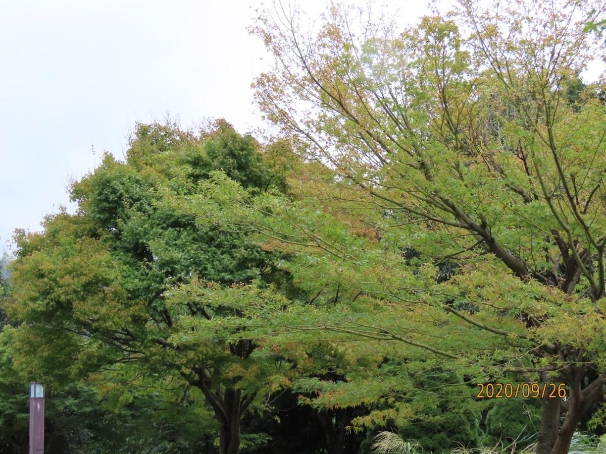 f:id:oisomachi-konkatsu-kekkon:20201002000243j:plain