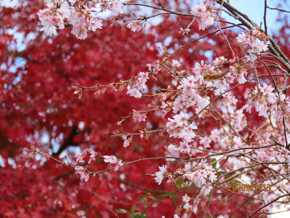 f:id:oisomachi-konkatsu-kekkon:20201117190349j:plain