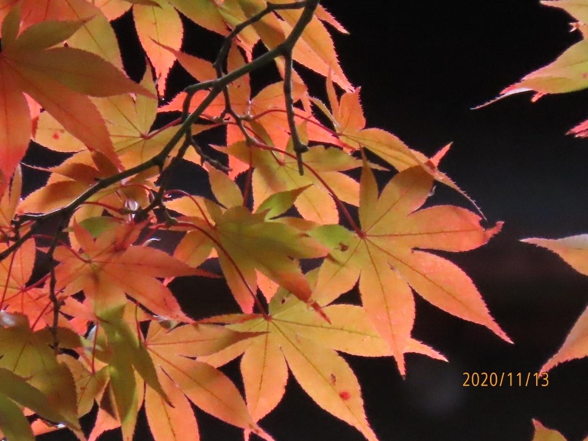 f:id:oisomachi-konkatsu-kekkon:20201117190642j:plain