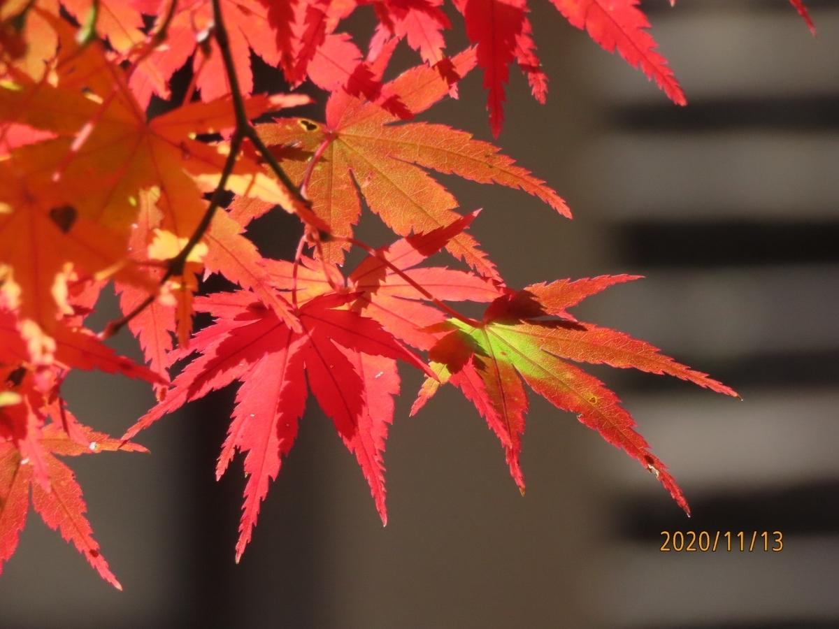 f:id:oisomachi-konkatsu-kekkon:20201117191025j:plain