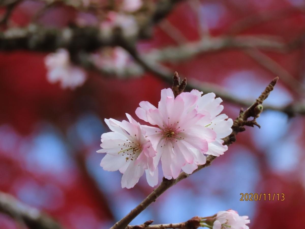 f:id:oisomachi-konkatsu-kekkon:20201117191204j:plain