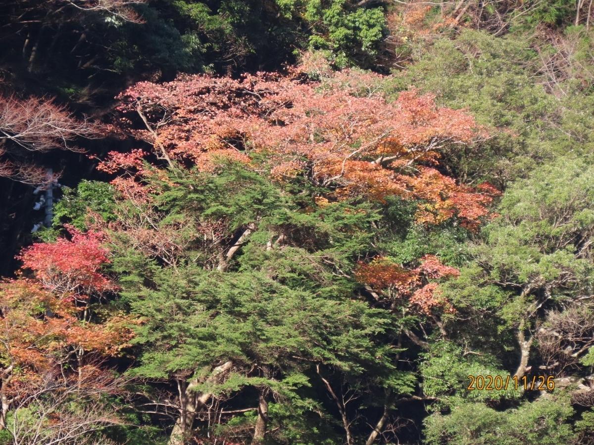 f:id:oisomachi-konkatsu-kekkon:20201203015557j:plain