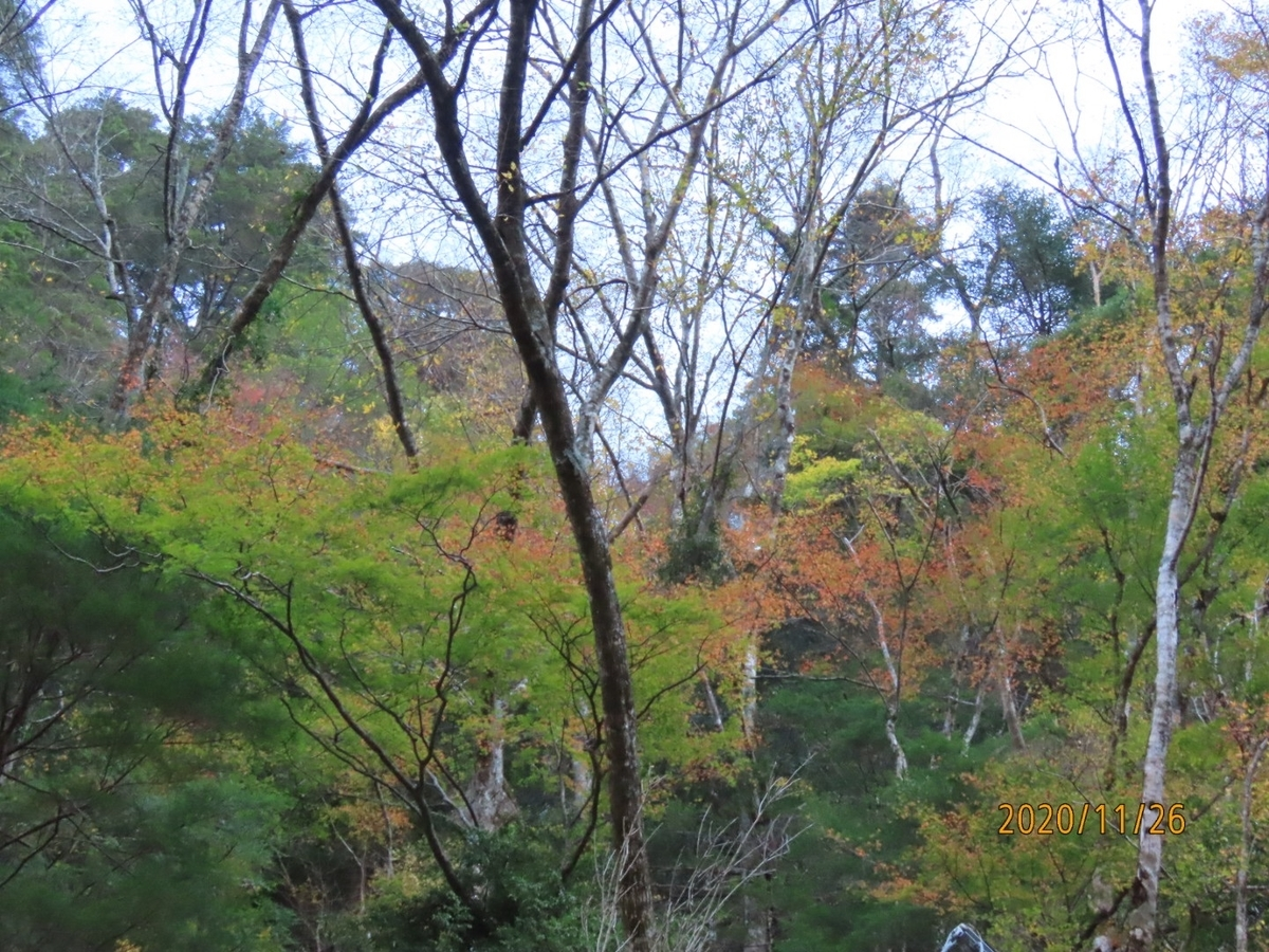 f:id:oisomachi-konkatsu-kekkon:20201203015608j:plain