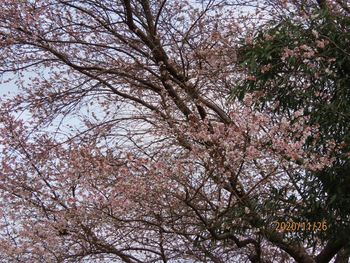 f:id:oisomachi-konkatsu-kekkon:20201203015920j:plain