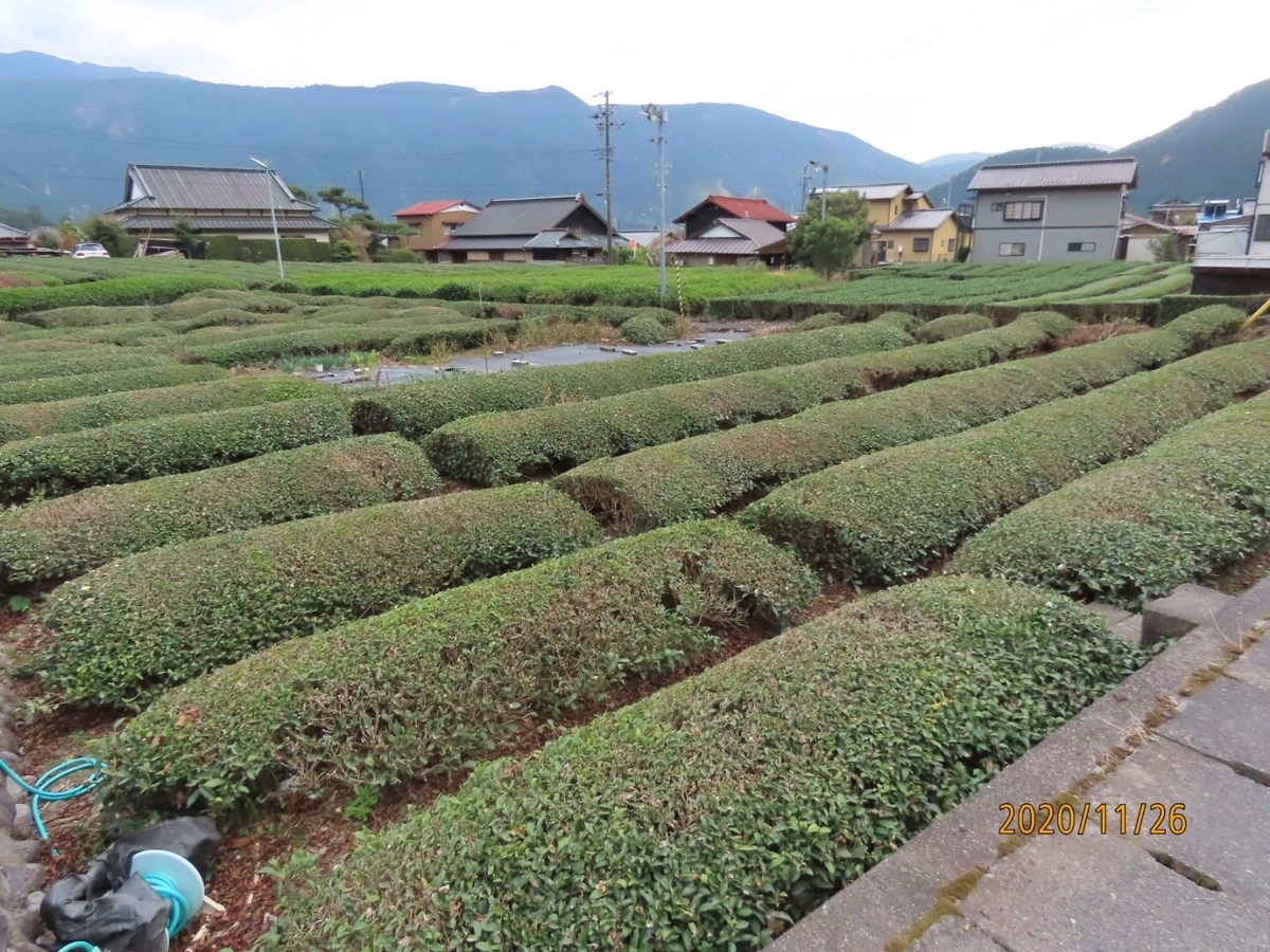 f:id:oisomachi-konkatsu-kekkon:20201203015945j:plain