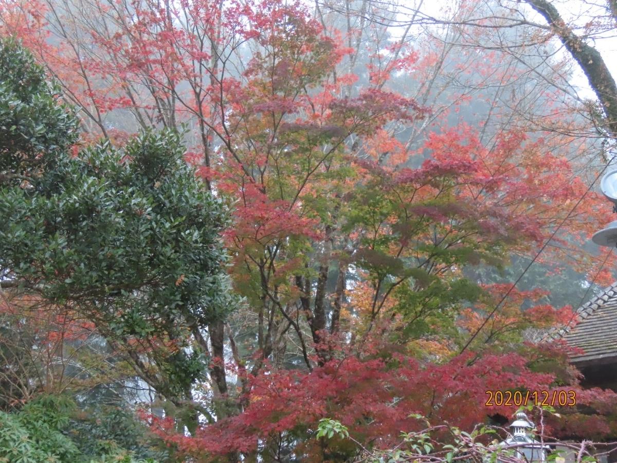 f:id:oisomachi-konkatsu-kekkon:20201212181845j:plain