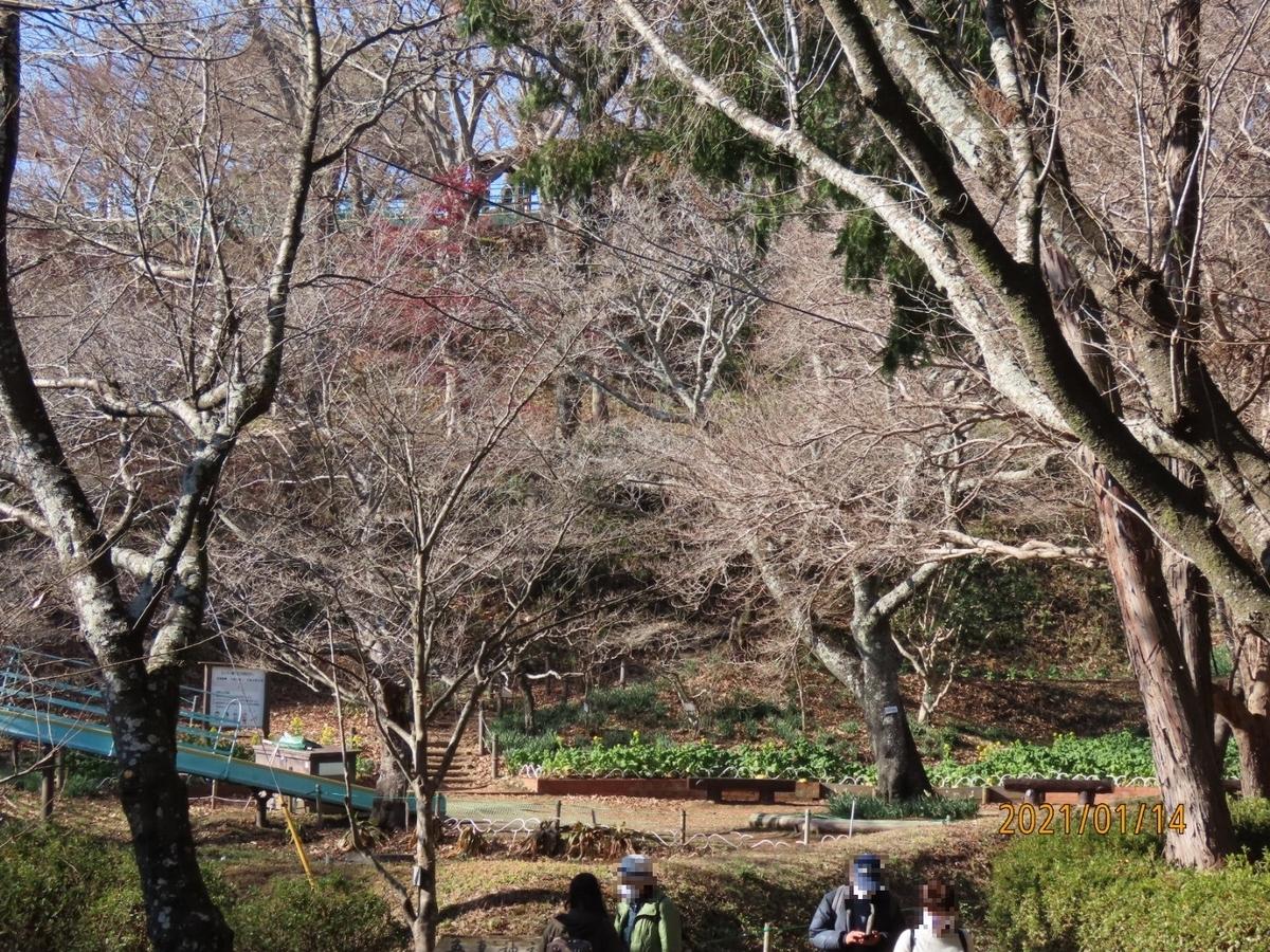f:id:oisomachi-konkatsu-kekkon:20210115212913j:plain