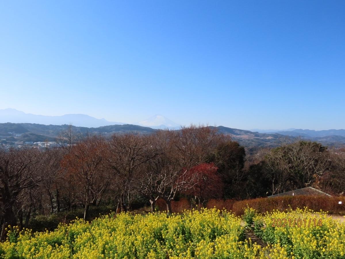f:id:oisomachi-konkatsu-kekkon:20210115212927j:plain