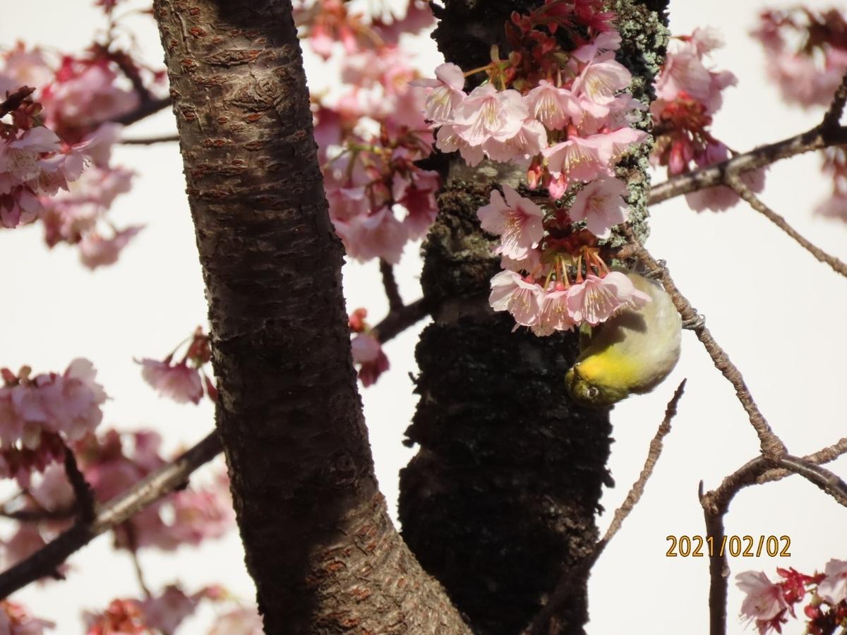 f:id:oisomachi-konkatsu-kekkon:20210206182323j:plain
