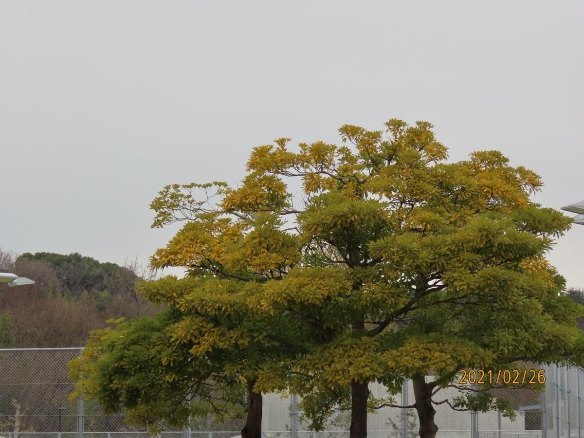 f:id:oisomachi-konkatsu-kekkon:20210227154216j:plain