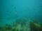 [大分][ダイビング][田ノ浦][水中写真][Cカード]