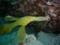 [大分][蒲江][水中写真][ダイブワン]