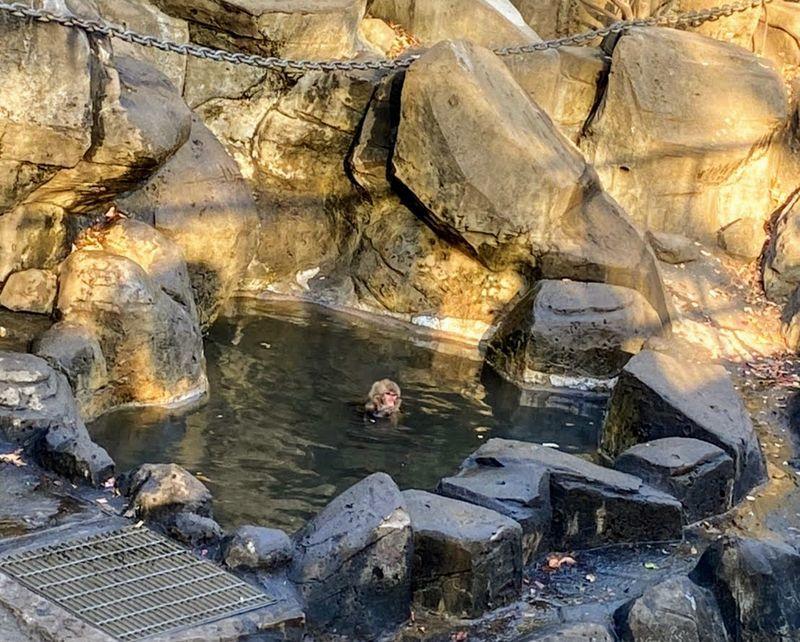 サル山温泉