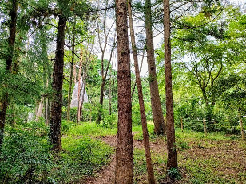 ムーミンバレーパークの森