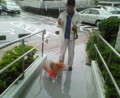 雨にもめげずしなもんへ傘慈しみ