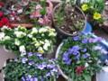 花盛り春一番を追い払う