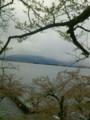 琵琶湖にはまだ咲いてます桜花