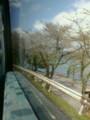 車窓から琵琶湖さくらが散り急ぐ