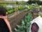 孫娘菜園が好き人が好き