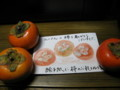 絵手紙に柿のお礼を塗り重ね