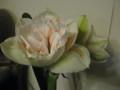 友からのプレゼントですこの花も