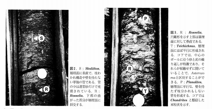 f:id:okamurauchino:20171117232614p:plain