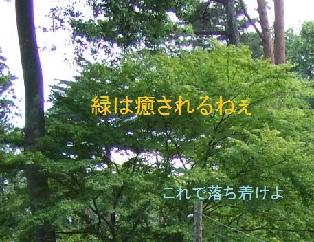 f:id:okan_san:20170321123202j:plain