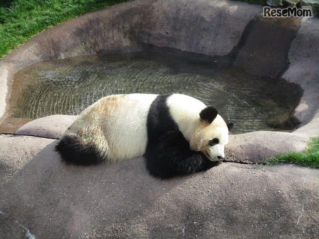 1位はパンダが魅力の…日本の動物園・水族館ランキング2018