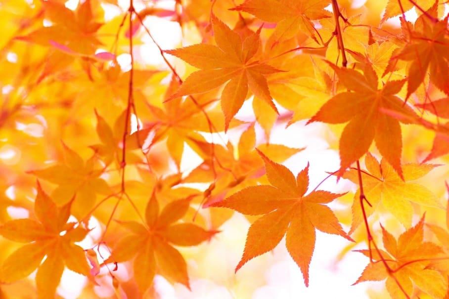 もうすぐ紅葉の秋!自然に癒されたい人におすすめな紅葉の名所4選