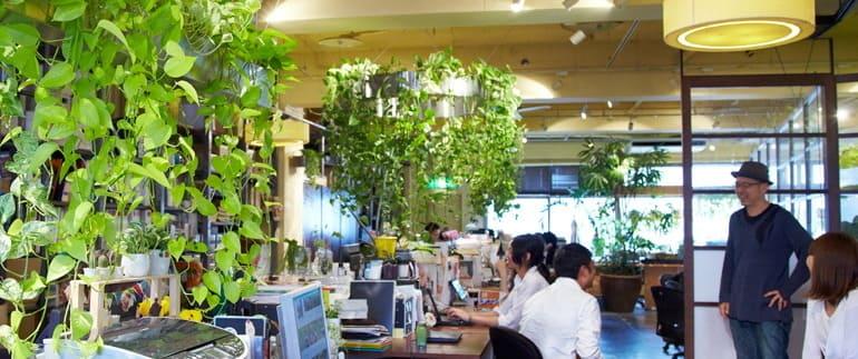 グリーンのあるオフィスで働く!?快適空間を演出する4つの観葉植物レイアウト術
