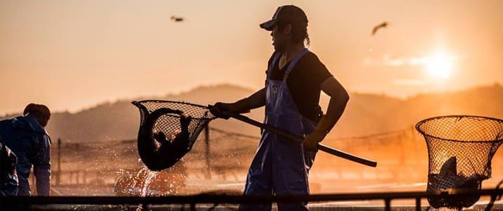 若き漁師たちが起こしたイノベーション! 次世代が憧れる水産業を目指す「フィッシャーマンジャパン」とは