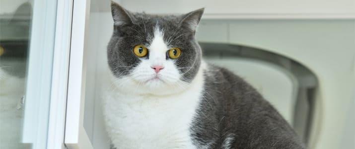 振り返ればネコがいる!? 爽やかオフィスの真ん中で活躍するモフモフ看板娘に会いにきた!