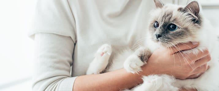 """かわいいだけじゃない猫たちの仕事。人を笑顔にするセラピーキャットの""""天性の癒やし力"""""""