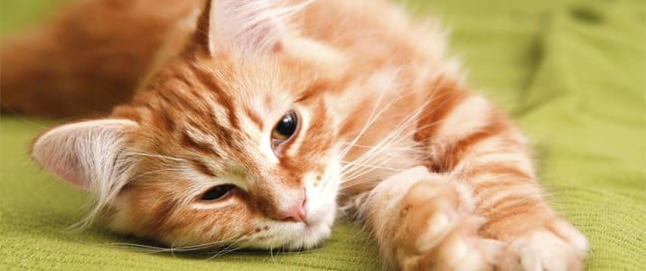 オフィスに猫はいかが? 猫付きシェアオフィスの実態に迫る