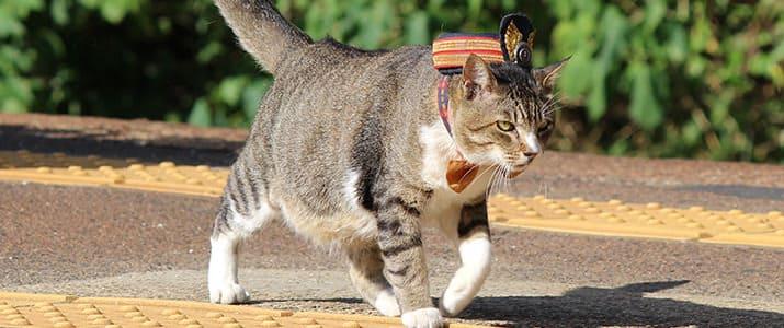 """これが本当の招き猫? 小さな町を救ったイケメン猫駅長""""りょうま""""の物語"""