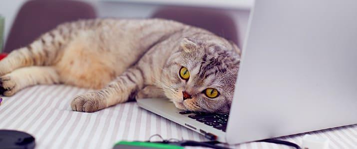 猫! ネコ!! ぬこ!!! もふもふラブリー 癒やしの猫記事4選