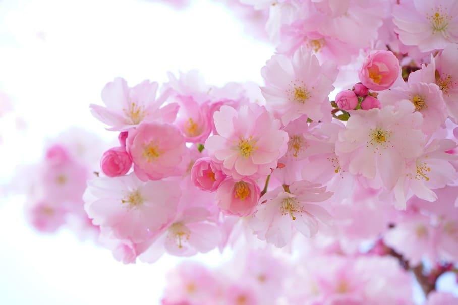 いつものお花見を楽しくする8つのアイテム