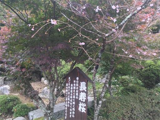 f:id:okazu1ban:20171104164456j:image