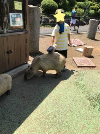 f:id:okeiko-life:20180808142757p:plain