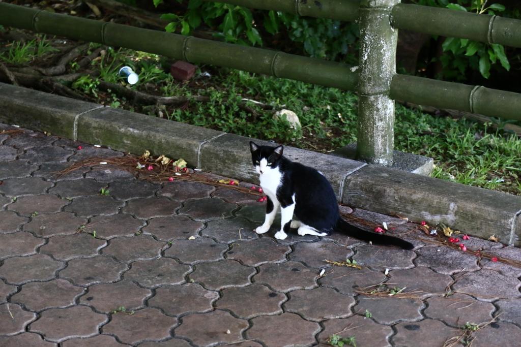 f:id:oki-umeboshi:20160716172352j:plain