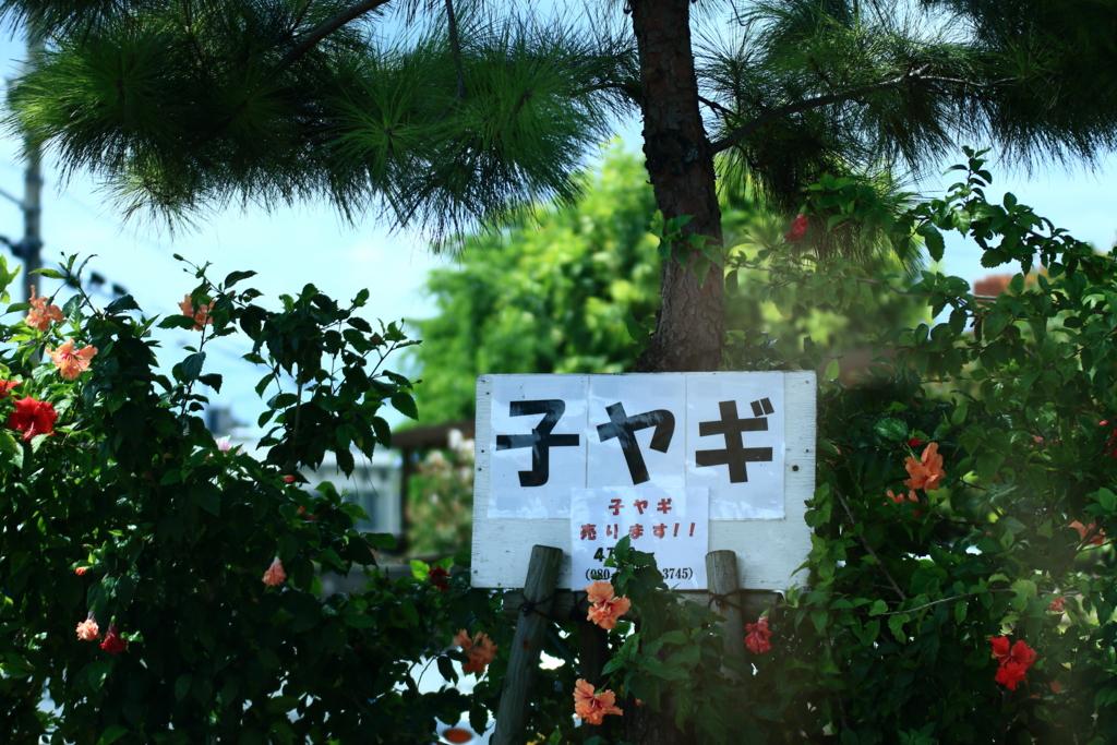 f:id:oki-umeboshi:20160906020944j:plain