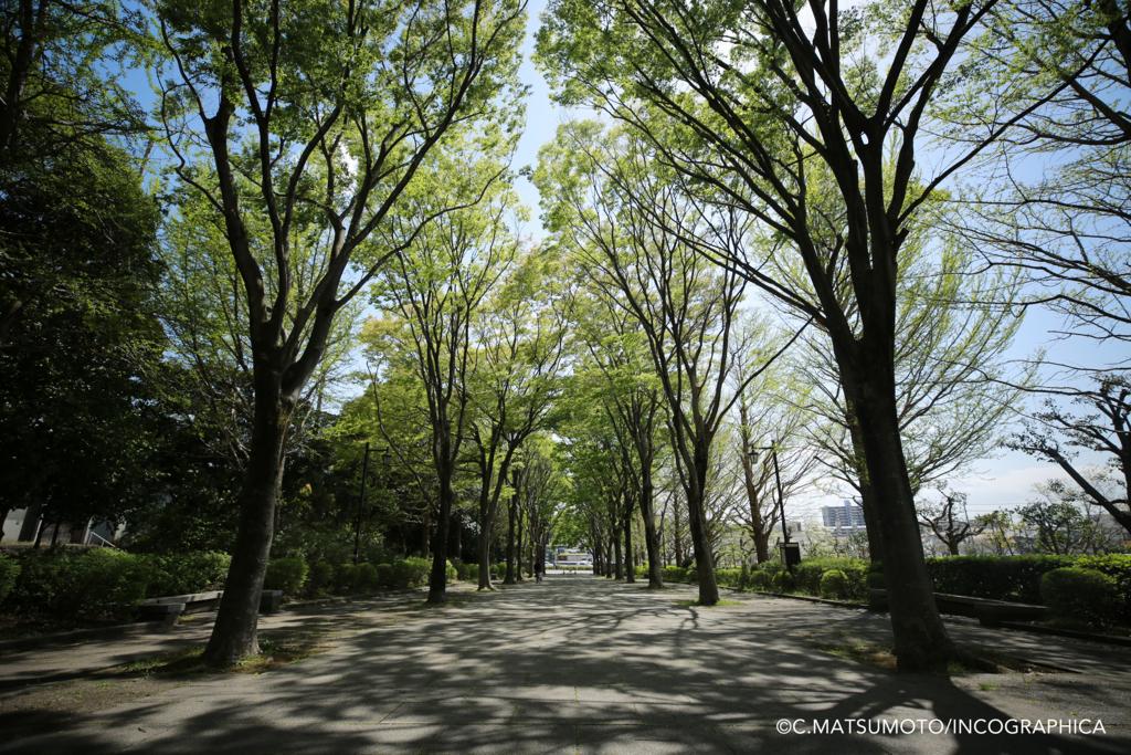 f:id:okina_monkparakeet:20180629200624j:plain
