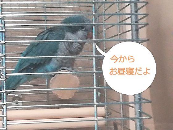f:id:okinan181025:20190710223740j:plain