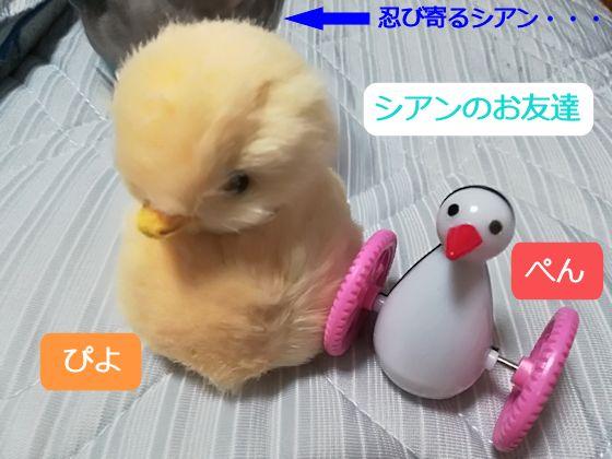 f:id:okinan181025:20190731230411j:plain