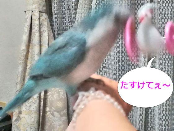 f:id:okinan181025:20190731230424j:plain