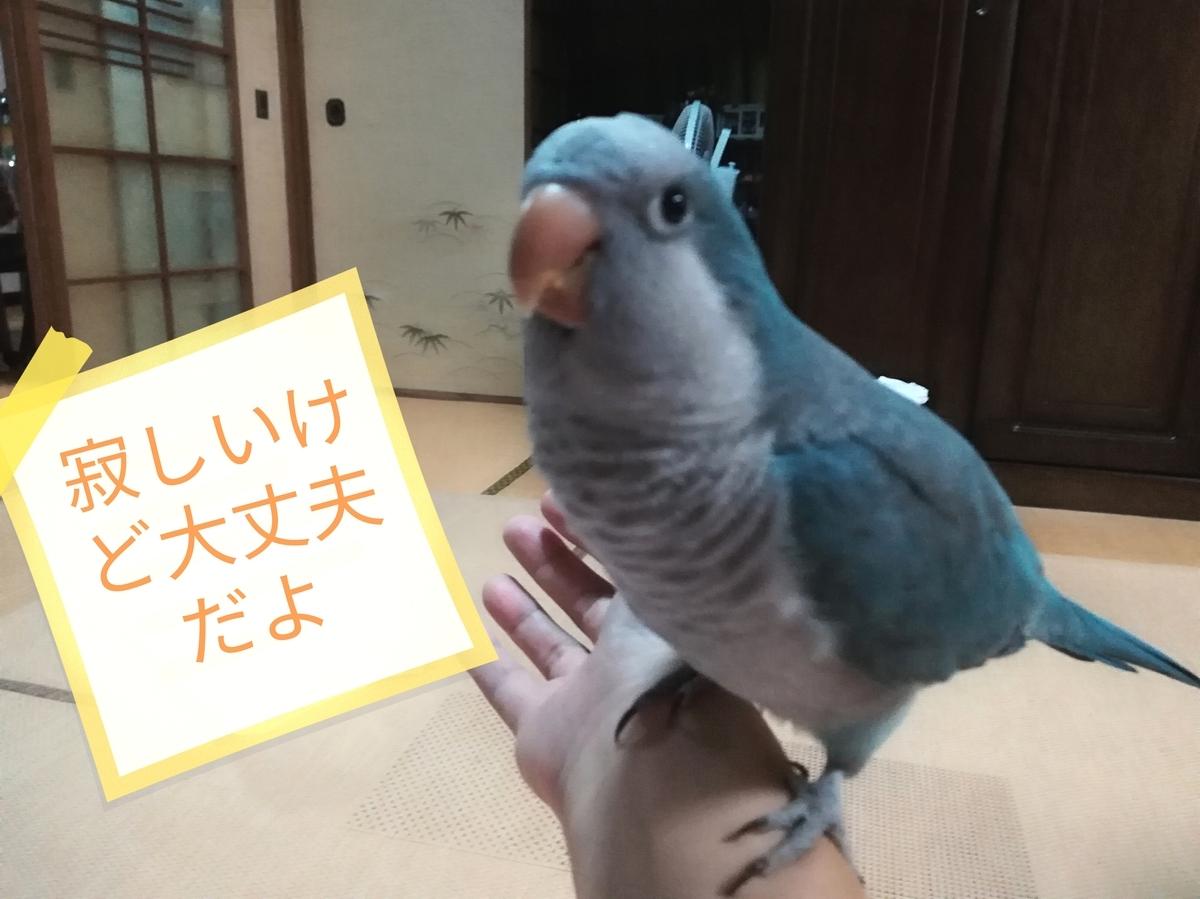 f:id:okinan181025:20190814231027j:plain