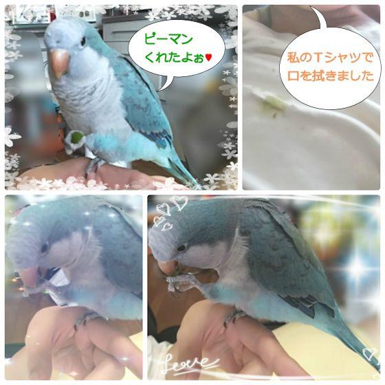 f:id:okinan181025:20190902232836j:plain