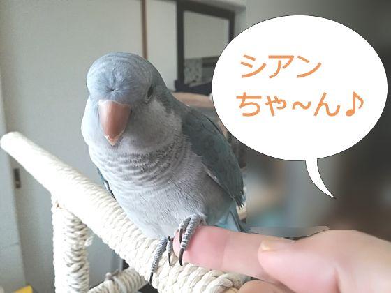 f:id:okinan181025:20190912212235j:plain